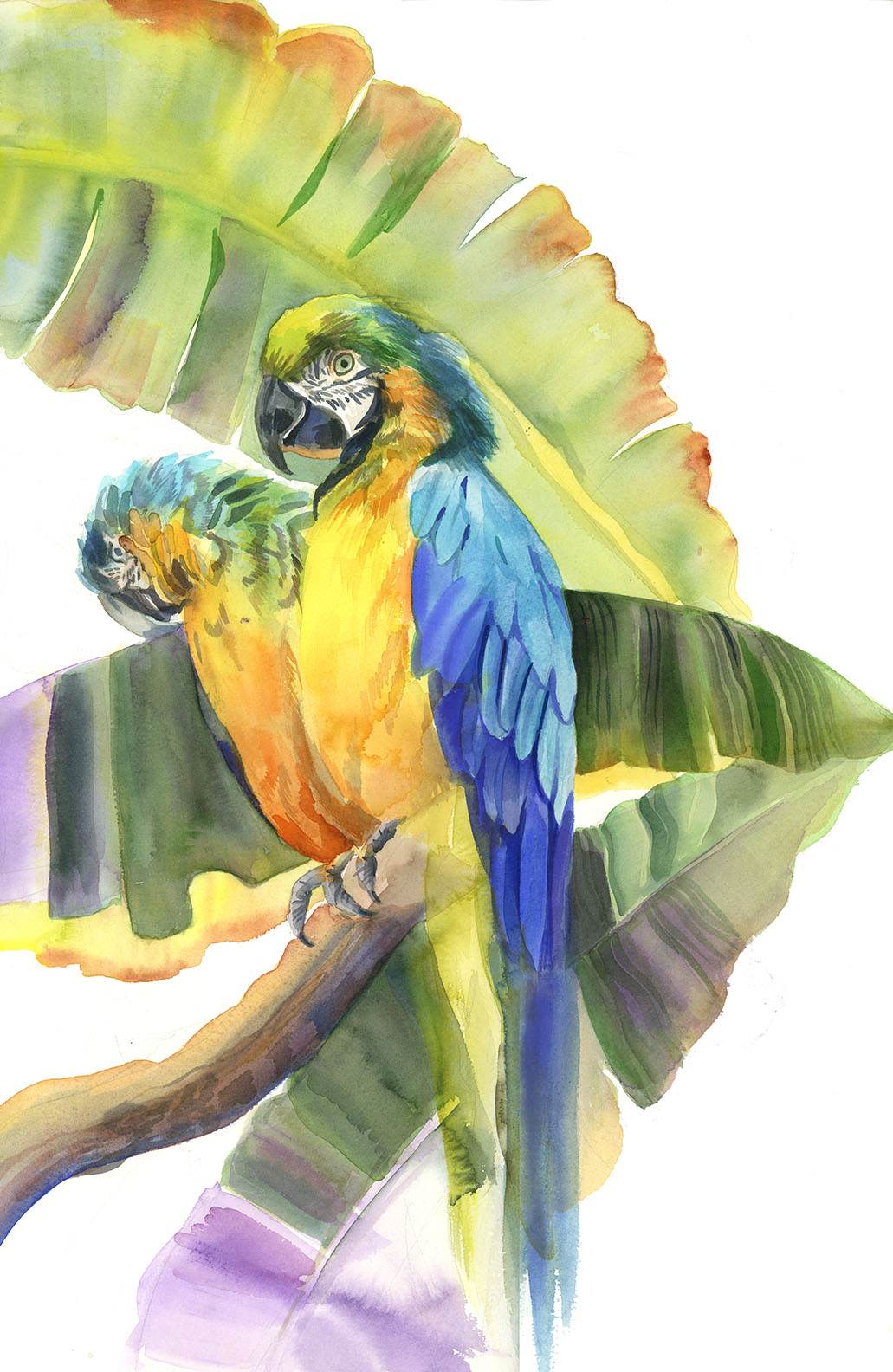 bird-macaw-pair