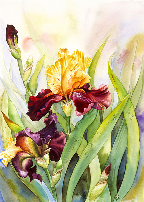 iris-golden-splendor
