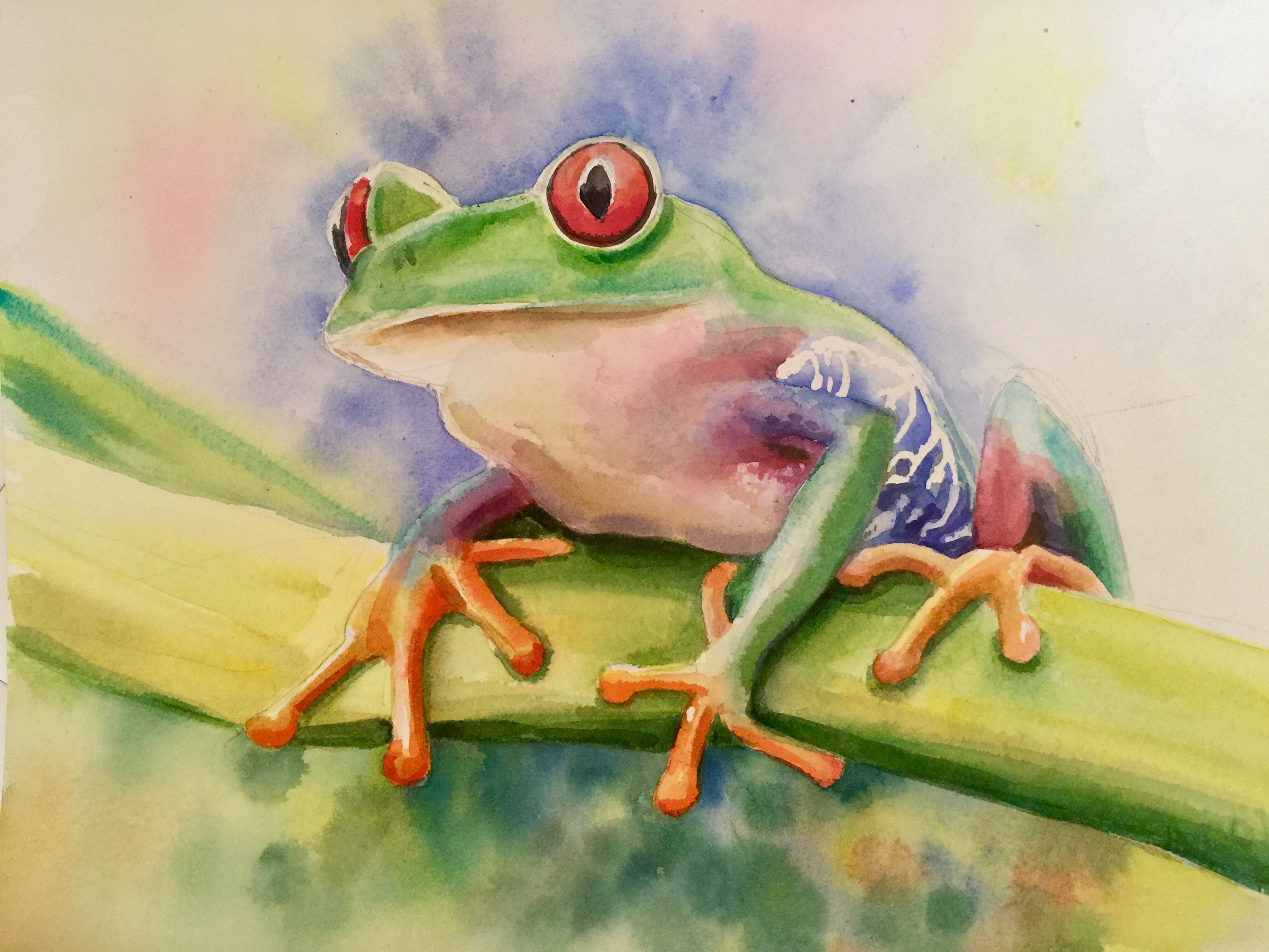 redeyefrog